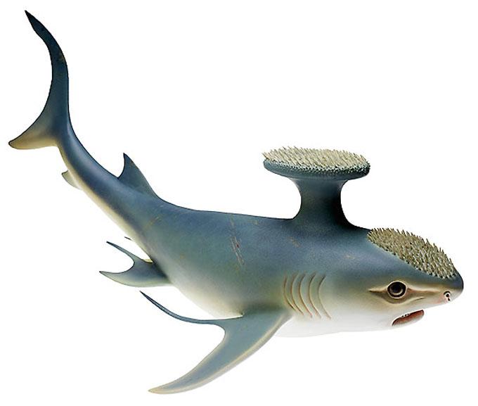 Древняя акула стетакант