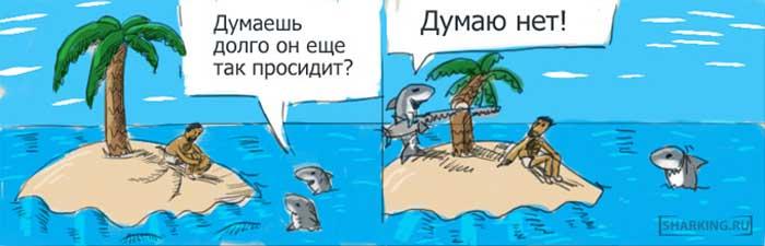 Акулы и остров