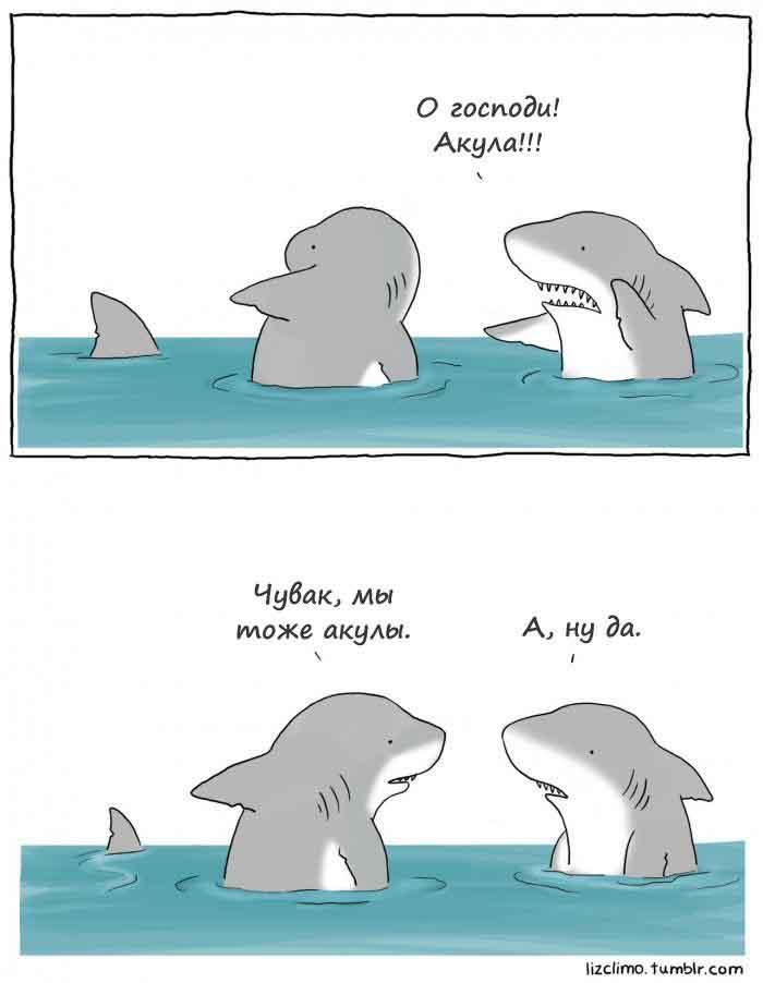 Две акулы купаются