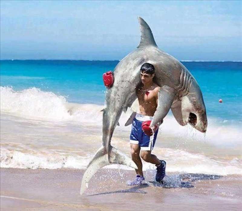 Акула и боксер