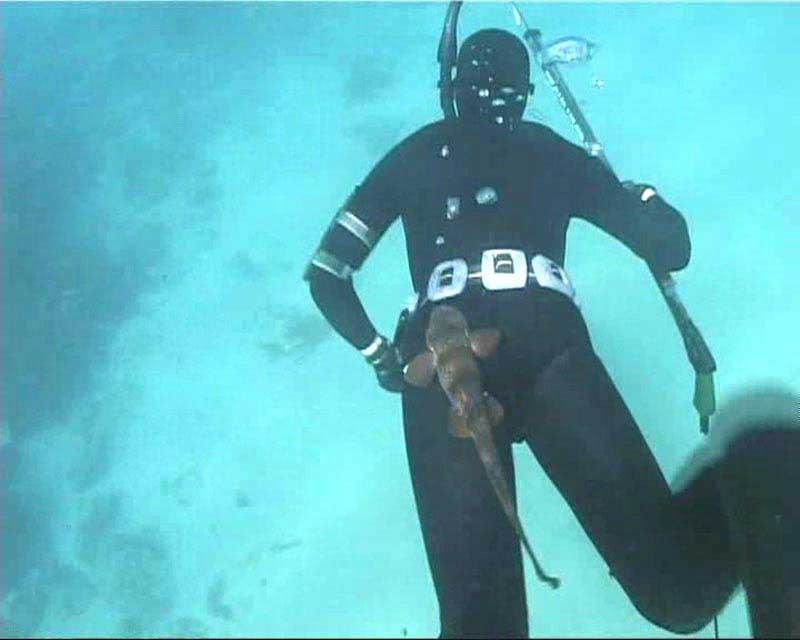 Акула схватила за задницу дайвера