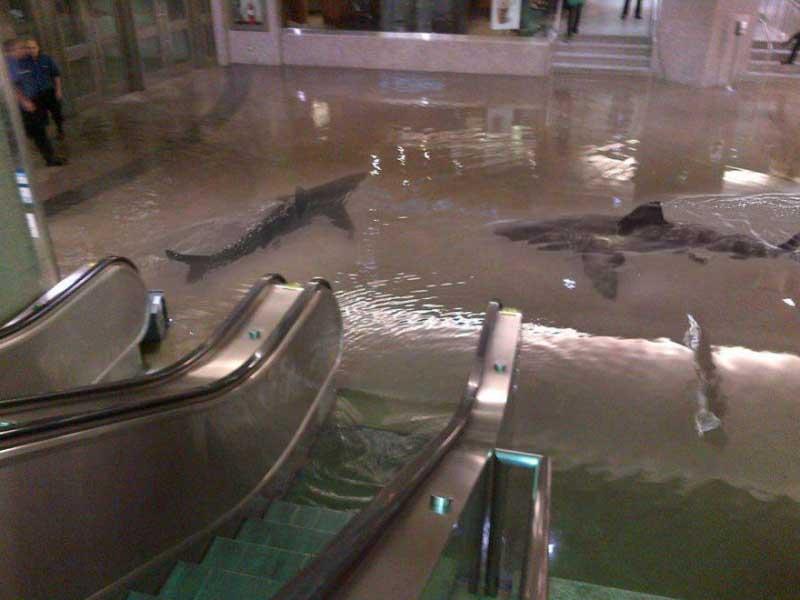 Акулы плавают в магазине
