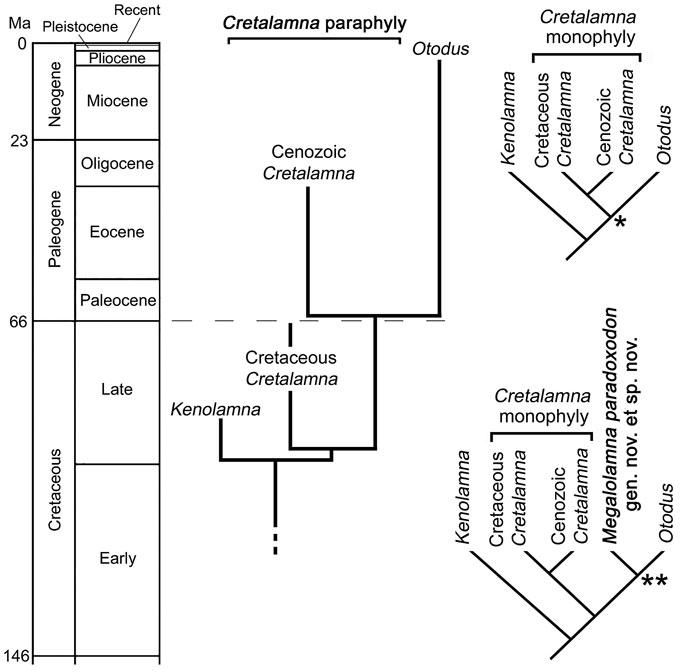 Генеалогическое древо акулы Otodus