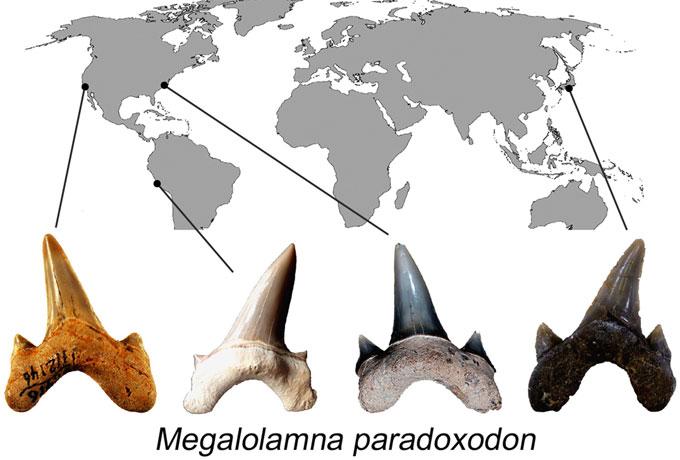 Места палеонтологических находок зубов акул