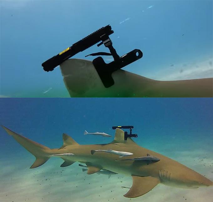 Фото: Акула с лазером