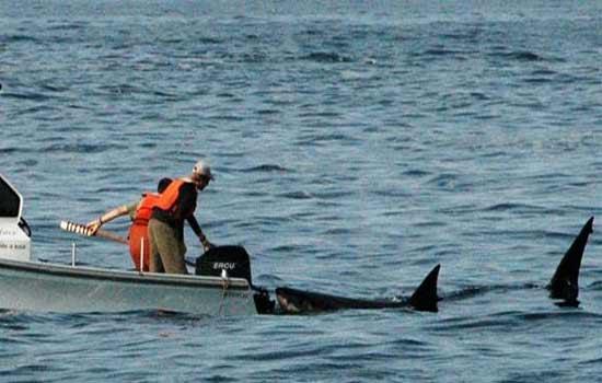 Фото: Акула напала на лодку