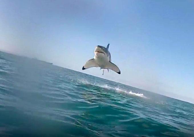 Фото: Акула-убийца выпрыгивает из воды