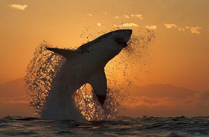 Использование генов акулы в спорте