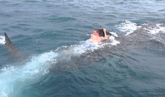 Фото: Прокатился верхом на китовой акуле