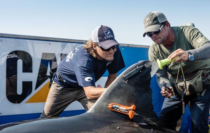 Фото: установка датчиков на акулу