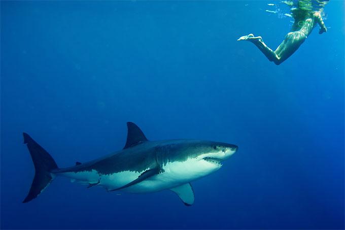Фото: нападение акулы на отдыхающего