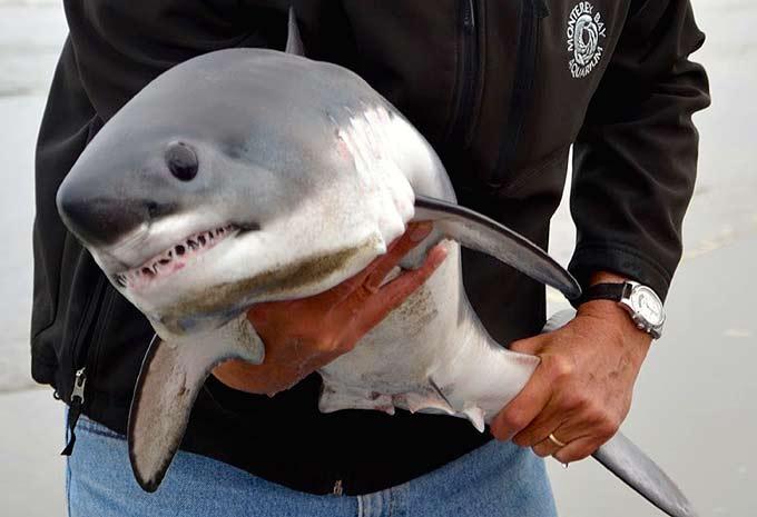 Фото: Поймал акулу руками