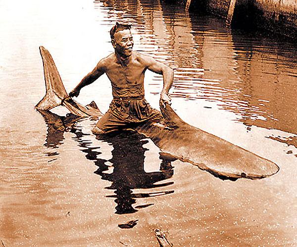 Фото: Гавайцы катаются на акуле