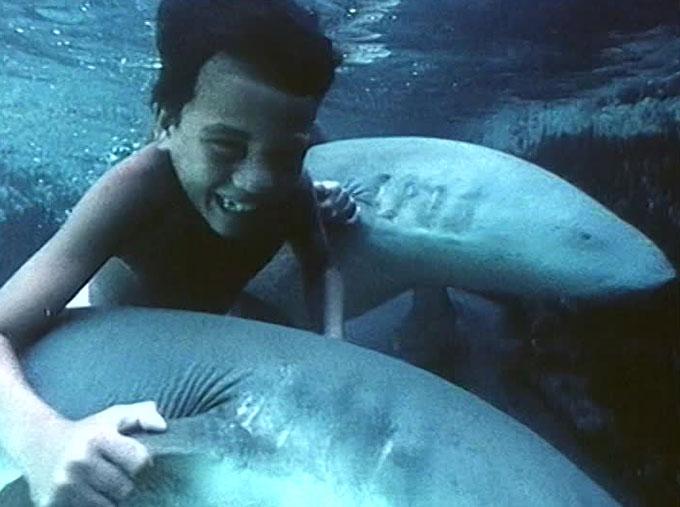 Фото: Как поплавать верхом на акуле