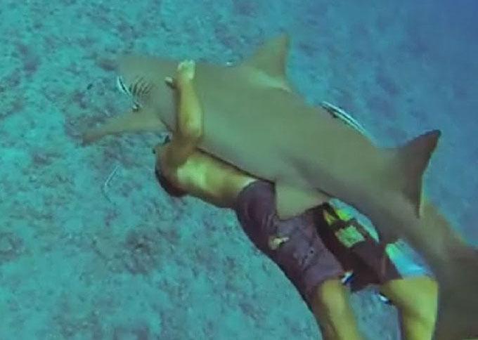 Фото: Катание на акуле - как оседлать акулу?