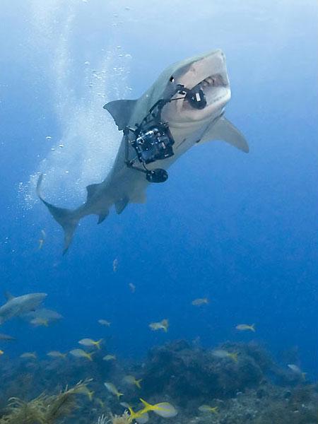 Фото: акула отобрала у дайвера видеокамеру