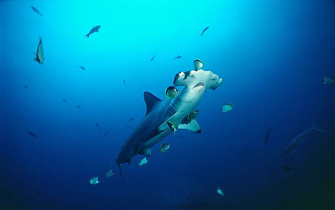 Фото: Массаж, косметология, пилинг, СПА-процедуры для акул