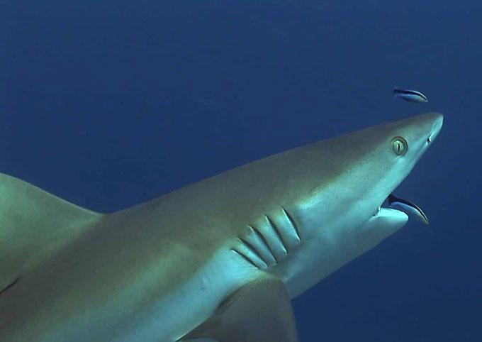 Фото: Лечение зубов - рыбы-чистильщики