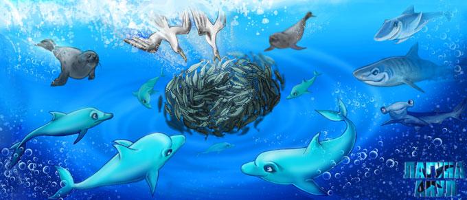 Охота акул, дельфинов и котиков на сардин - Морская сказка