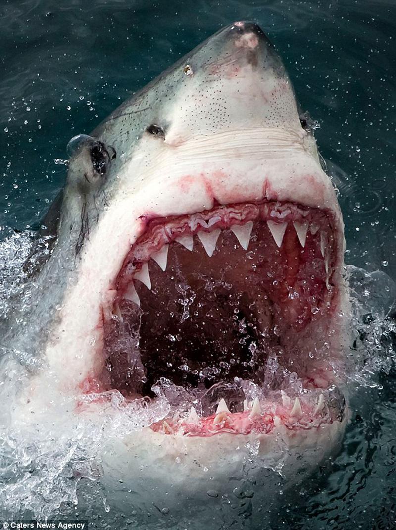 качественно приготовленные картинки про больших акул точно