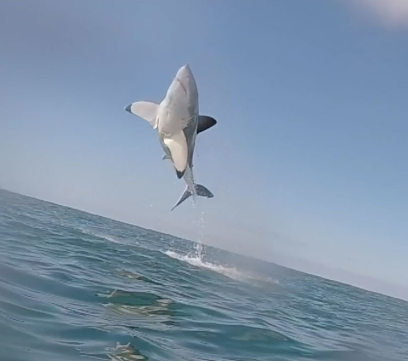 Картинки летающие акулы