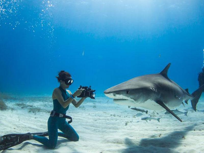 итоге увольнение прикольные фото с акулами монокль это положительный