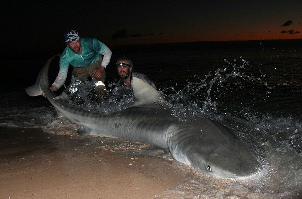 ловля акулы картинки них оказалось