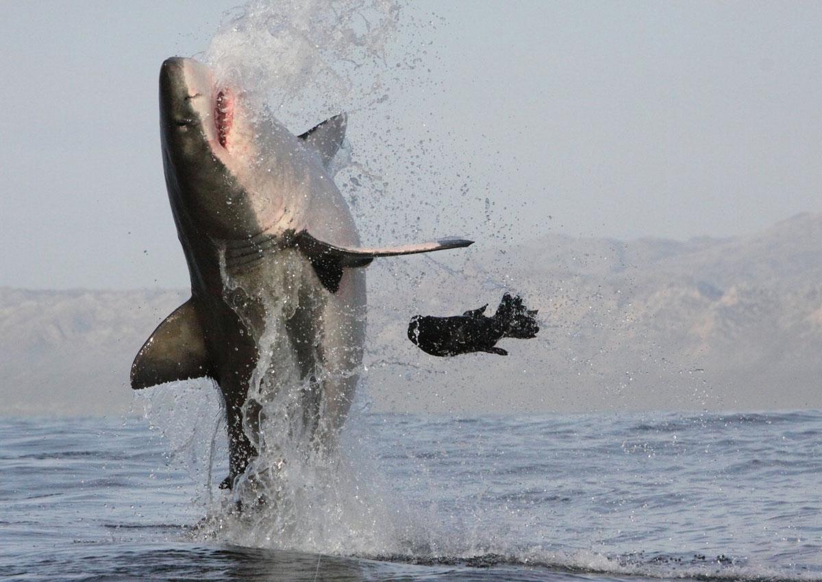 народе охота на акул фото тогда
