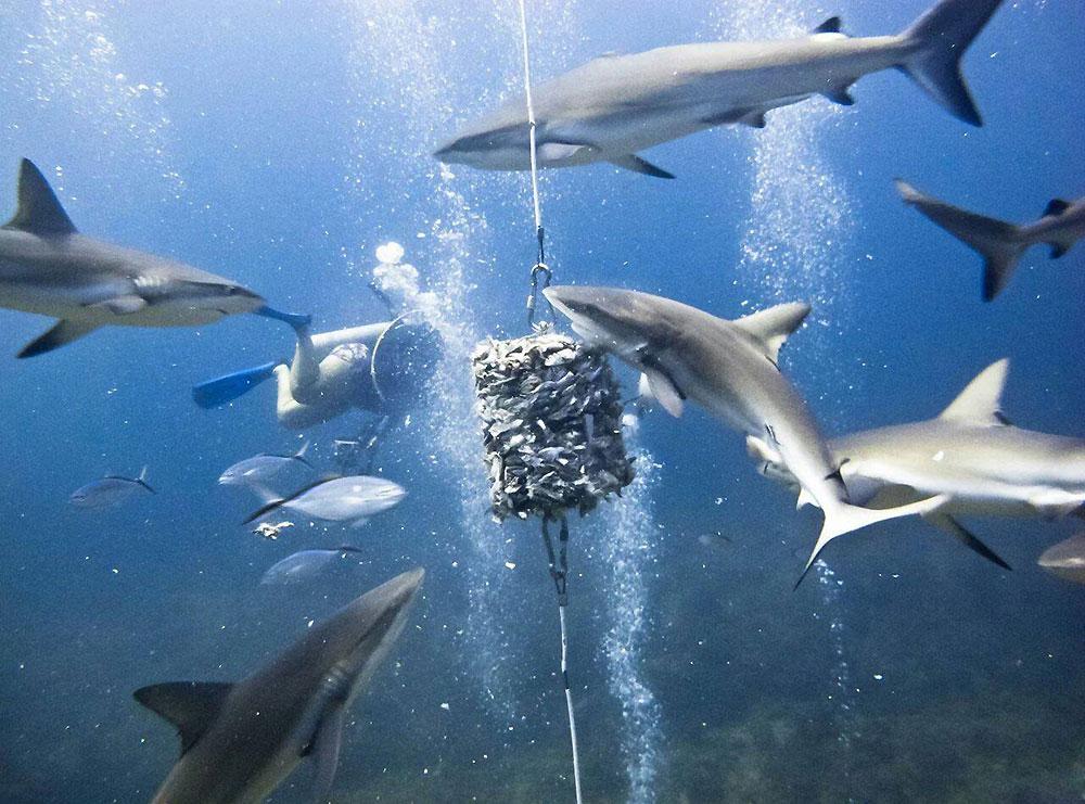 Много картинок акул