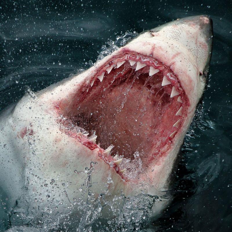 здесь фото белой акулы первое место новосибирска