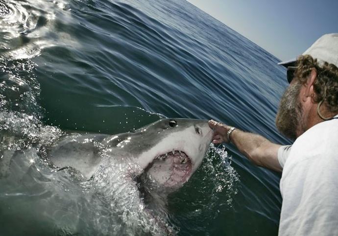 Белая акула опасна для человека фото