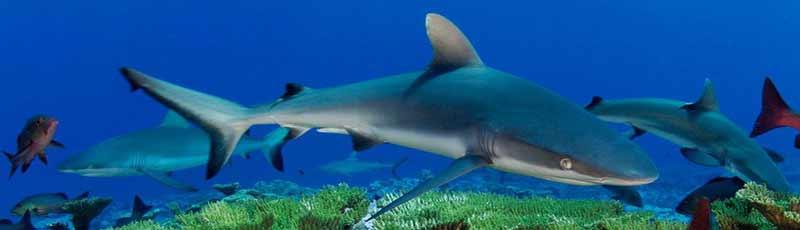 Факты из жизни акул