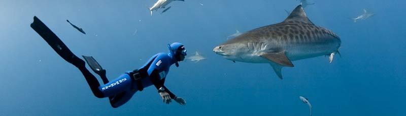 Факты про акулу и человека