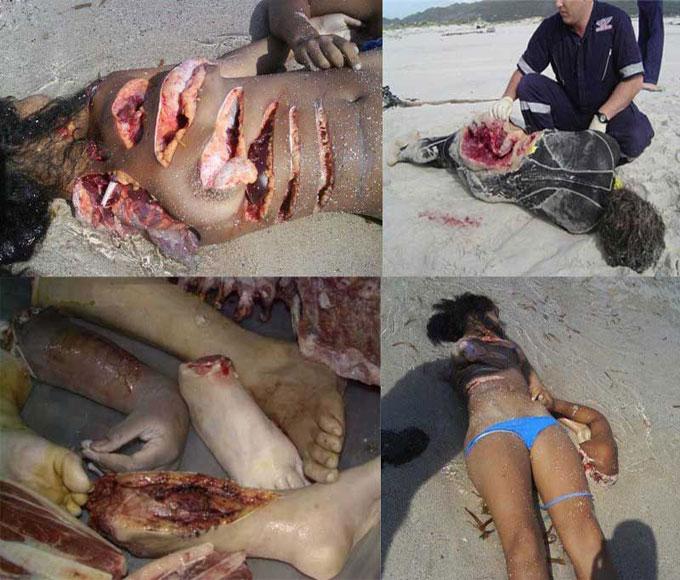 Фото жертвы акул-людоедов