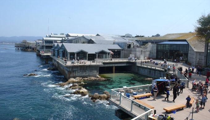 Белые акулы океанариума Monterey Bay Aquarium
