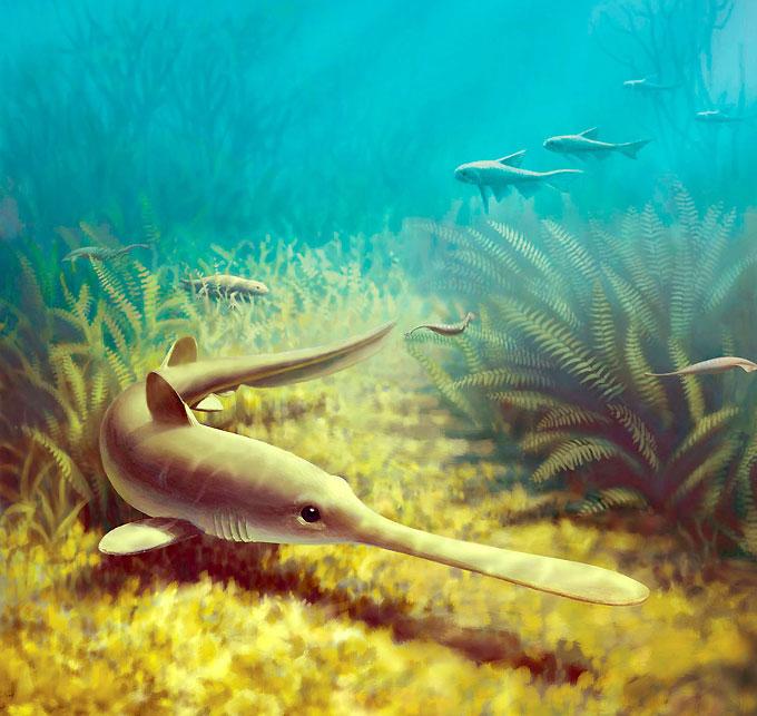 Фото: доисторическая акула бандринга Bandringa