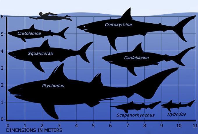 Фото: размеры вымерших древних акул