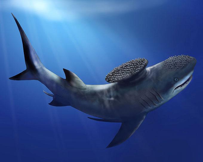 Фото: реликтовая акула стетакант Stethacanthus