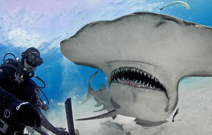 Фото: зубы и челюсть гигантской акулы-молот