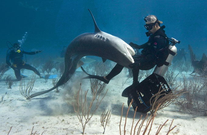 Фото: акула атакует дайвера