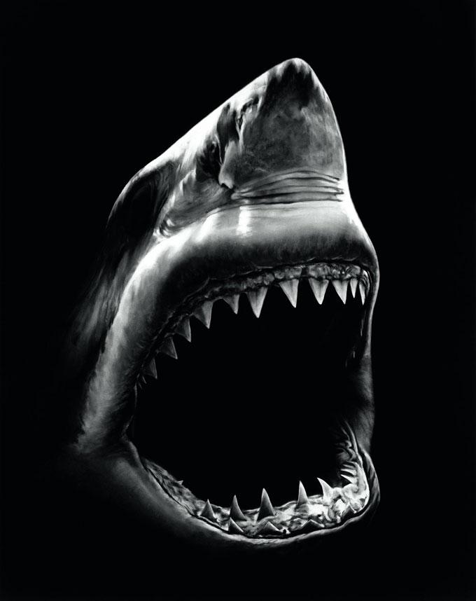 Портрет белой акулы