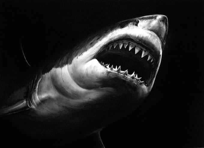 Изображение белой акулы