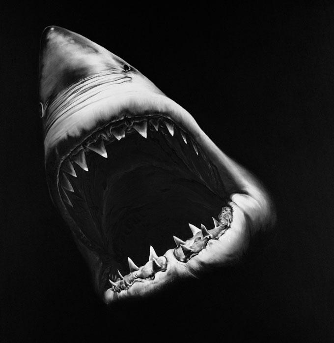 Портрет белой акулы угольным карандашом