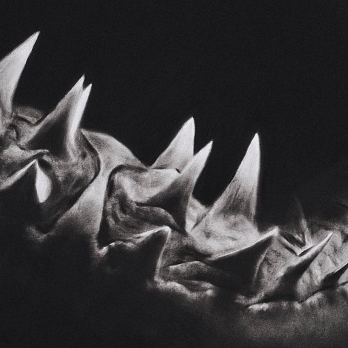 Рисунок зубов акулы угольным карандашом