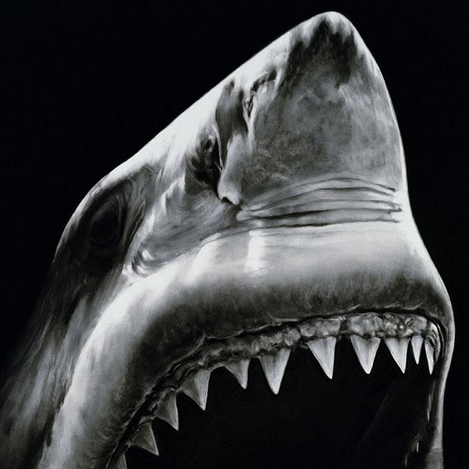 Рисунок челюсти акулы угольным карандашом