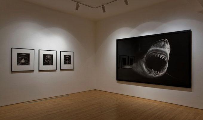 Картина большой белой акулы угольным карандашом