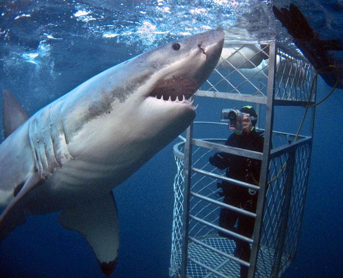 Погружение к белым акулам в Австралии