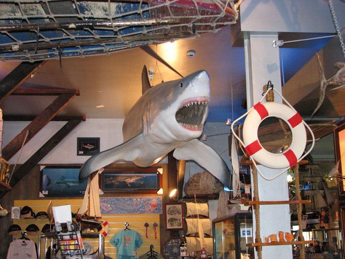 Акулий музей в Австралии