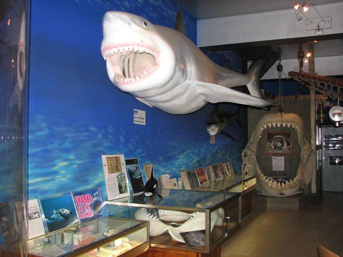 Музей Белой акулы