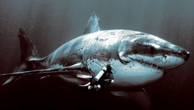 Большая акула Мегалодон
